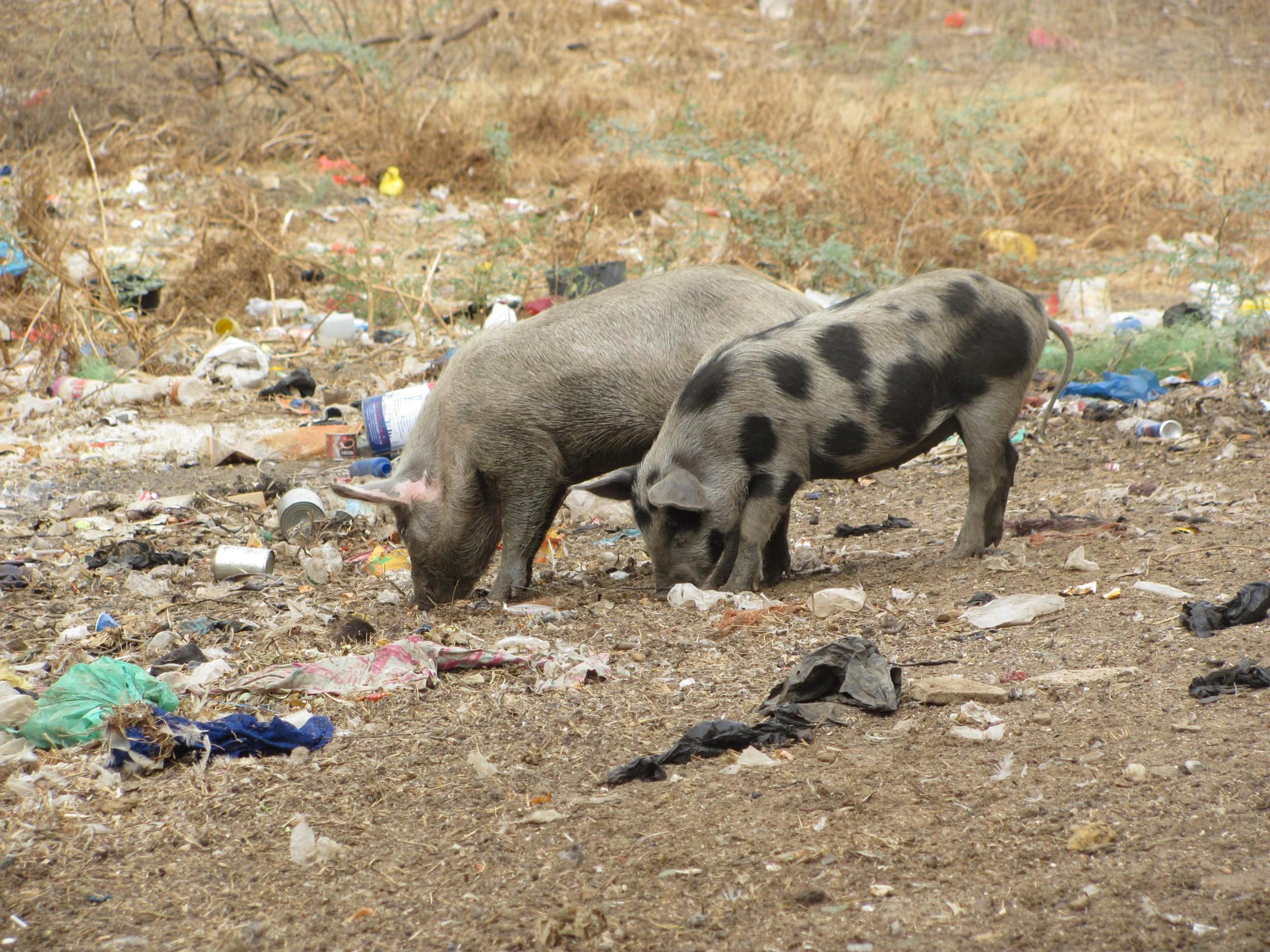 6. Civilizační plastový odpad – závažný problém Senegalu