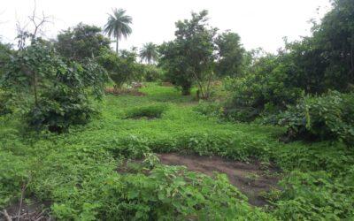 EX POST Po období dešťů je z Yagany opět džungle
